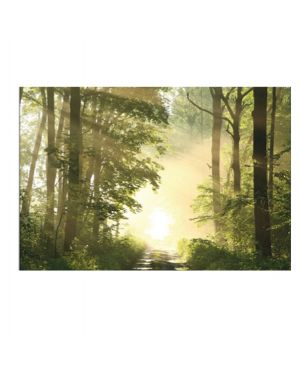 "Quadro in plexiglass 60x80cm ""foresta&#34 1CCF60x80.35.05 3660141892024 1CCF60x80.35.05"